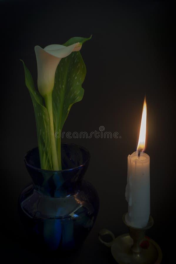 Chiuda su dei fiori arancio della fiamma e del giglio di candela fotografia stock libera da diritti