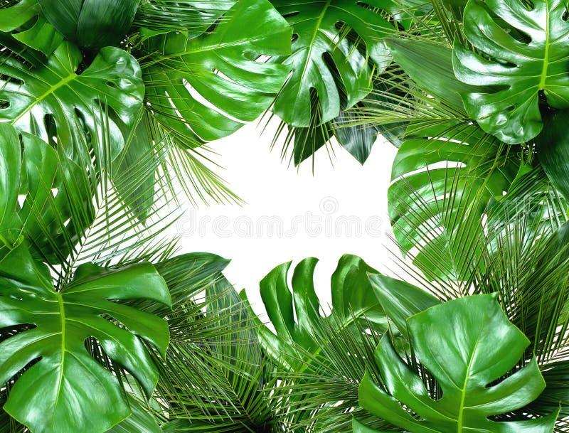 Chiuda su dei mazzi di varie foglie tropicali fresche sulla b bianca immagine stock