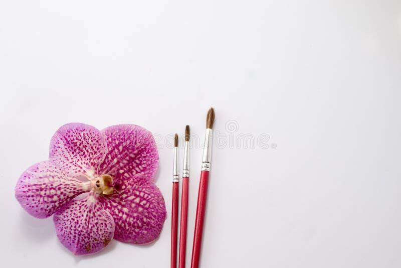 Chiuda su dei pennelli rossi con il fiore rosa isolato su fondo bianco tavola per pittura testo fotografia stock