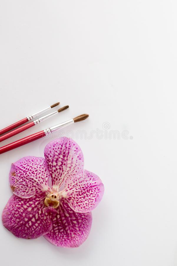 Chiuda su dei pennelli rossi con il fiore rosa isolato su fondo bianco tavola per pittura testo illustrazione vettoriale