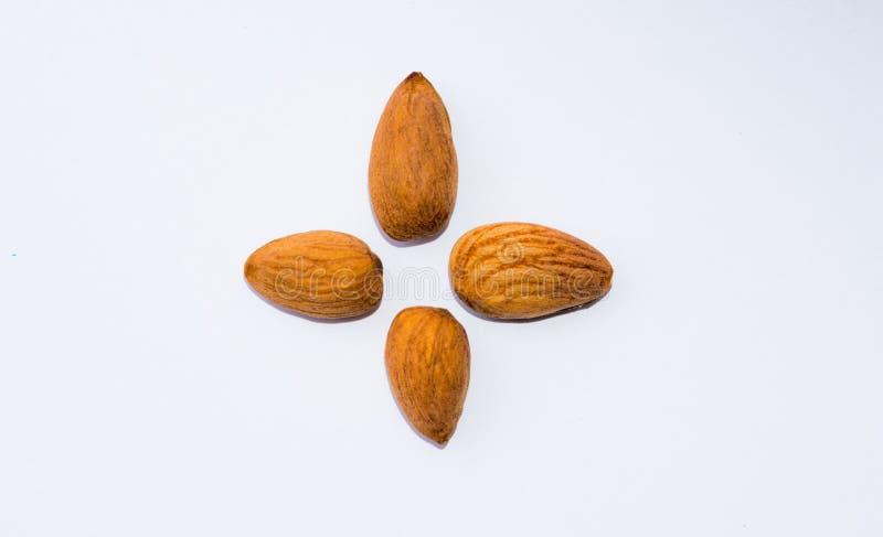Chiuda su dei semi marroni delle mandorle isolati su fondo bianco immagini stock libere da diritti