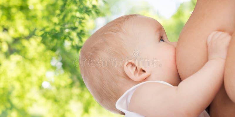 Chiuda su del bambino che succhia il seno della madre immagini stock