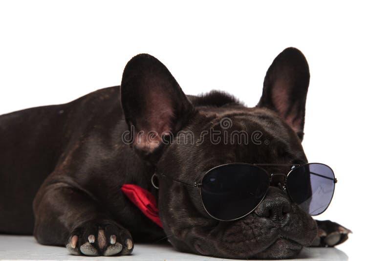 Chiuda su del bulldog francese del signore con la menzogne degli occhiali da sole immagini stock libere da diritti