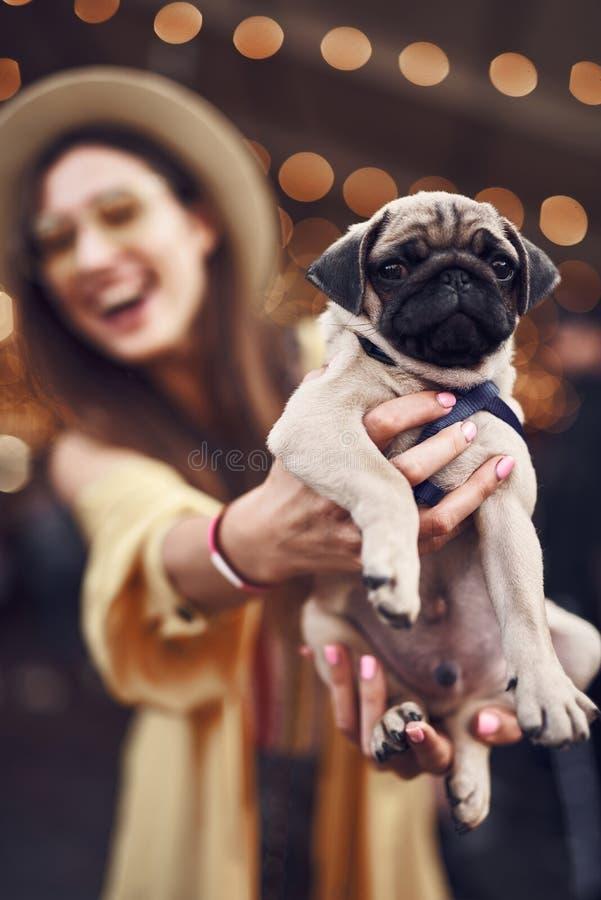 Chiuda su del cucciolo calmo nelle mani del proprietario emozionante dell'animale domestico fotografia stock libera da diritti
