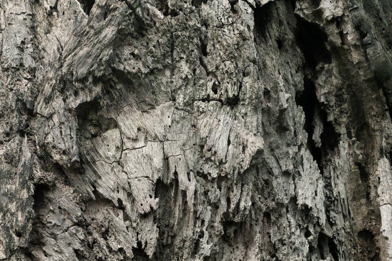 Chiuda su del fondo del tronco di albero, struttura del legno scuro della corteccia con il vecchio modello naturale per l'opera d fotografie stock