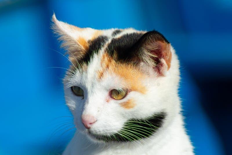 Chiuda su del fronte di un gatto in una barca blu in Essaouira Marocco fotografia stock libera da diritti