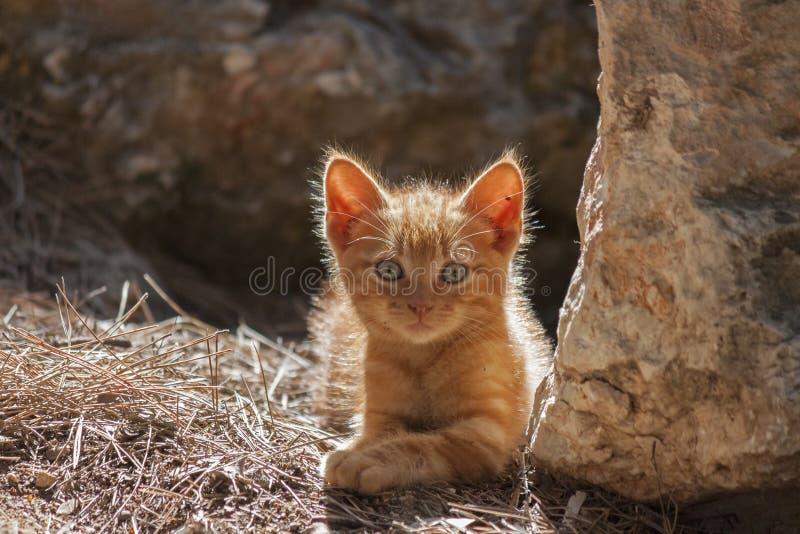 Chiuda su del gattino rosso immagine stock