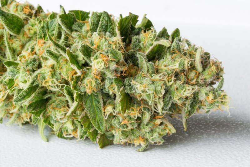 Chiuda su del germoglio medico appena raccolto della marijuana con i capelli fotografia stock libera da diritti