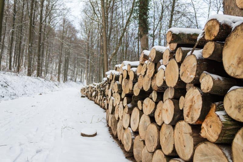 Chiuda su del taglio alto impilato collega la foresta per uso industriale nell'inverno immagini stock libere da diritti