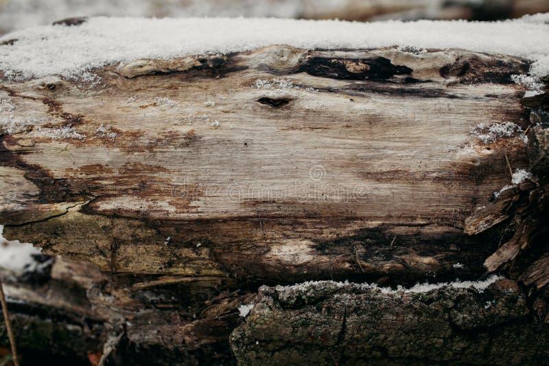 Chiuda su del tronco di albero tagliato come fondo Vecchi struttura e fondo del tronco di albero per progettazione Fondo naturale fotografia stock libera da diritti