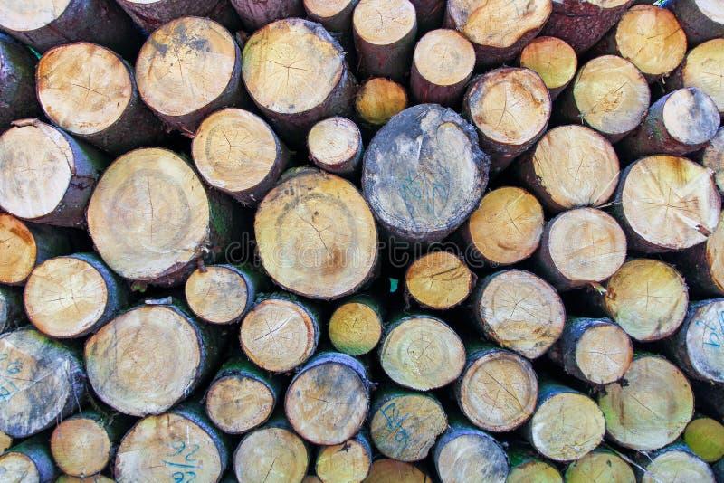 Chiuda su del tronco di albero tagliato fotografia stock