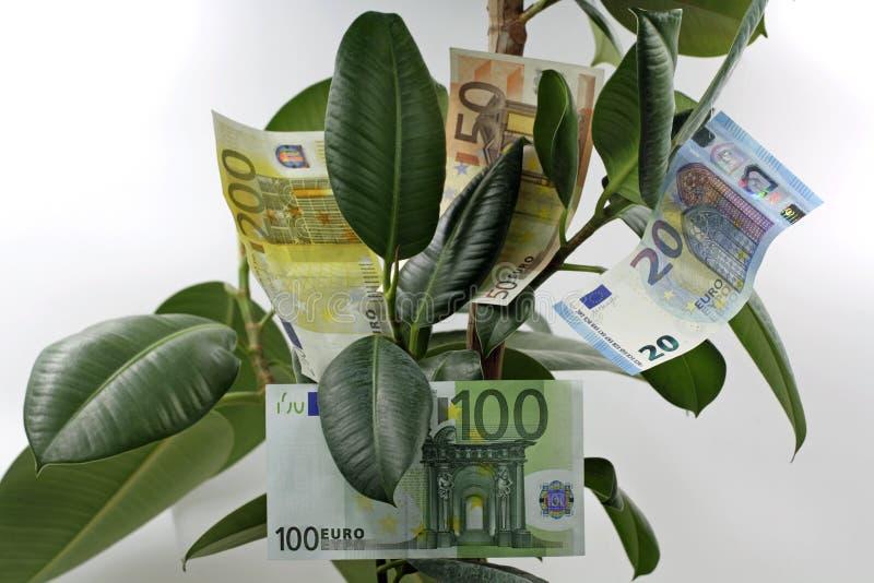 Chiuda su dell'albero dei soldi con le euro banconote dentro isolato su fondo bianco fotografie stock