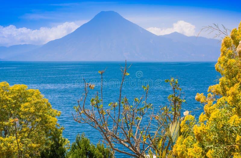 Chiuda su dell'albero variopinto delle piante di giallo con una vista di gorgeus del lago Atitlan, è il lago più profondo in tutt immagini stock