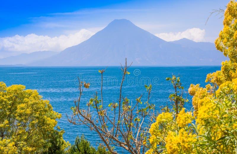 Chiuda su dell'albero variopinto delle piante di giallo con una vista di gorgeus del lago Atitlan, è il lago più profondo in tutt fotografia stock libera da diritti