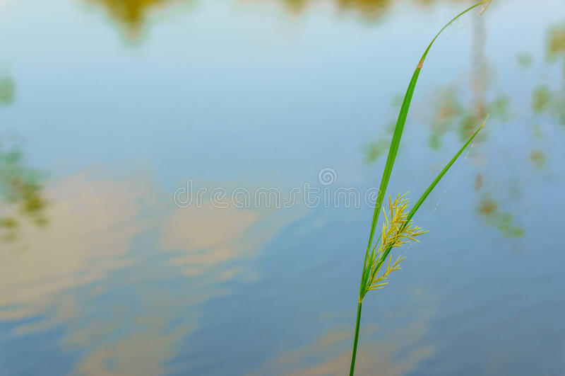 Chiuda su dell'erba per rilassarsi immagine stock