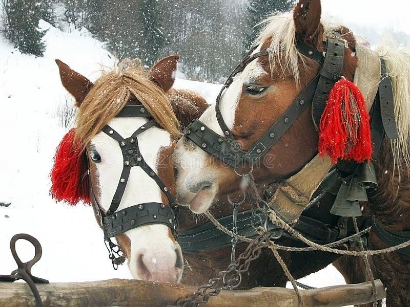 Chiuda su dell'le teste di cavalli con le decorazioni e le campane fotografia stock