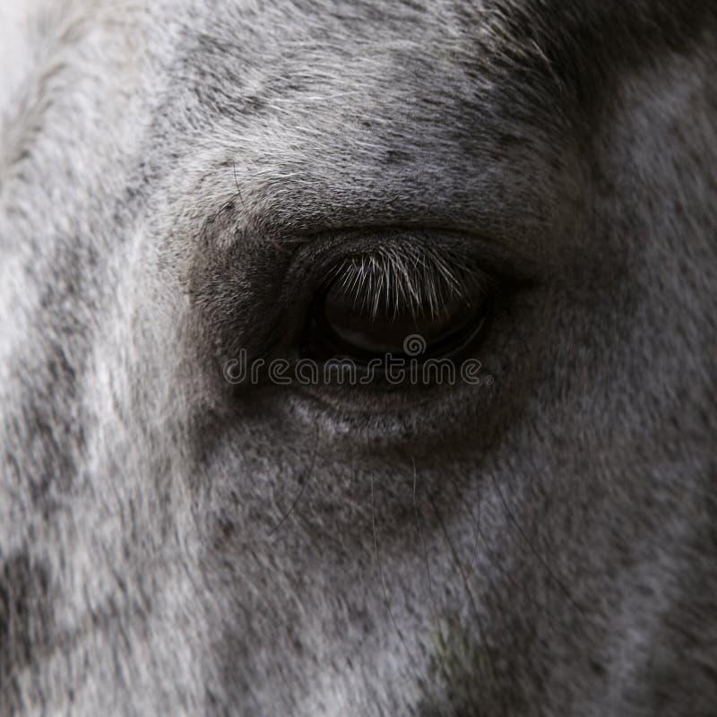 Chiuda in su dell'occhio di un cavallo fotografie stock libere da diritti