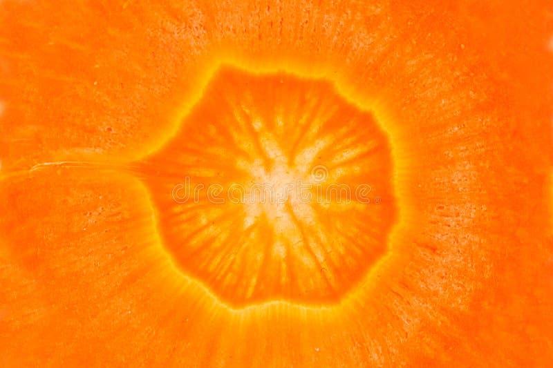 Chiuda su della carota fotografia stock libera da diritti