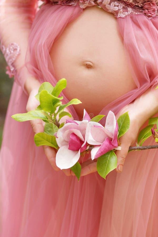 Chiuda su della donna incinta in vestito rosa vicino alla pancia nelle mani che tengono la molla con i fiori rosa della magnolia fotografie stock libere da diritti