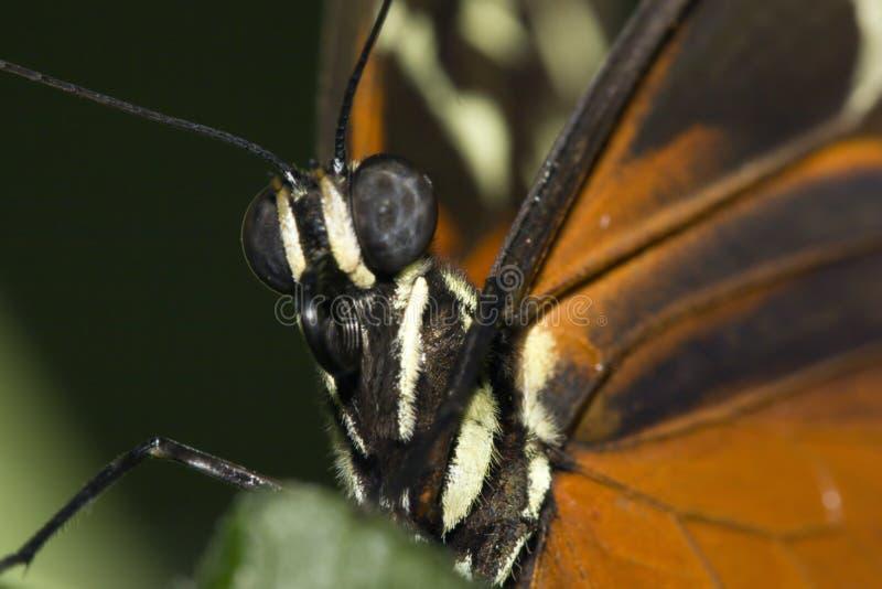 Chiuda in su della farfalla nera ed arancione fotografie stock libere da diritti