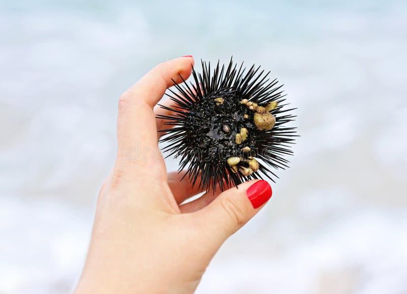 Chiuda su della mano della donna che tiene un discolo di Mar Nero sulla spiaggia immagini stock libere da diritti