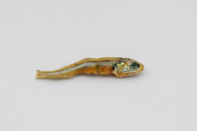 Chiuda su della sardina infantile secca utilizzata come condimento in alimenti e nella cottura fotografia stock libera da diritti