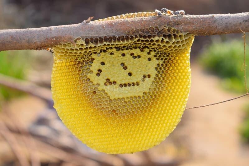 Chiuda su delle api del miele sul pettine del miele immagini stock libere da diritti