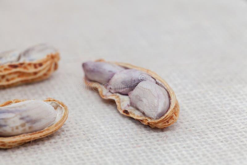 Chiuda su delle arachidi Boiled immagini stock libere da diritti