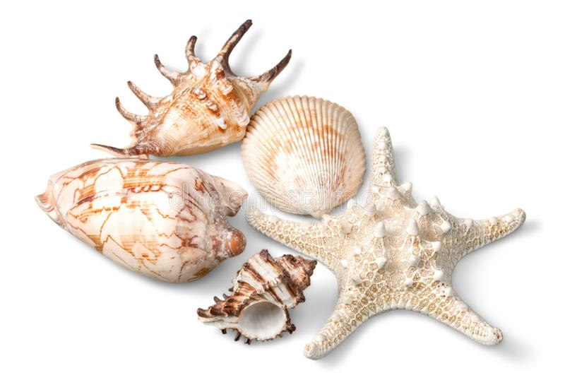 Download Chiuda Su Delle Coperture Dell'oceano Isolate Su Bianco Fotografia Stock - Immagine di acquicoltura, estate: 117979256
