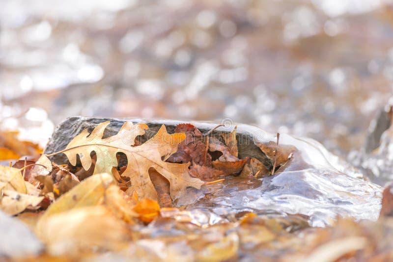 Chiuda su delle foglie marroni cadute su un terreno roccioso coperto di acqua congelata immagine stock libera da diritti