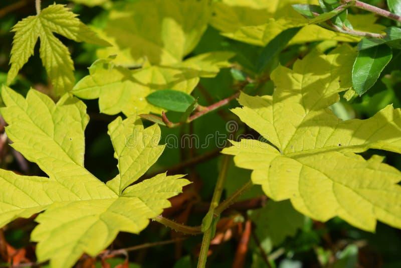 Chiuda su delle foglie nel mio giardino fotografia stock libera da diritti