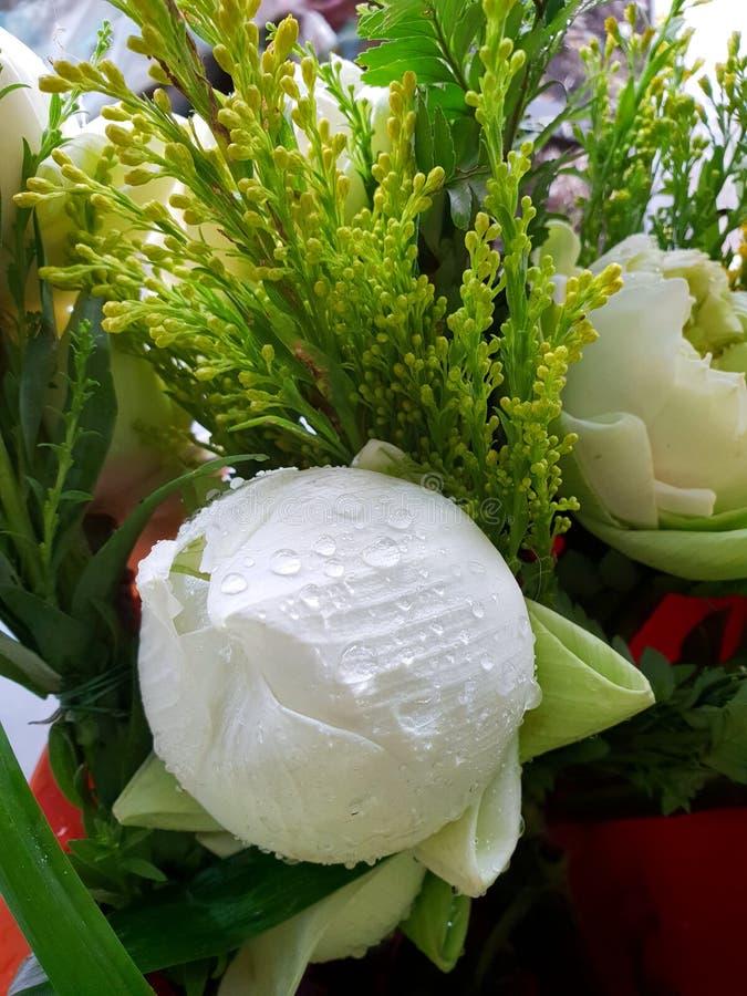 Chiuda su delle gocce con il fiore di loto bianco immagini stock