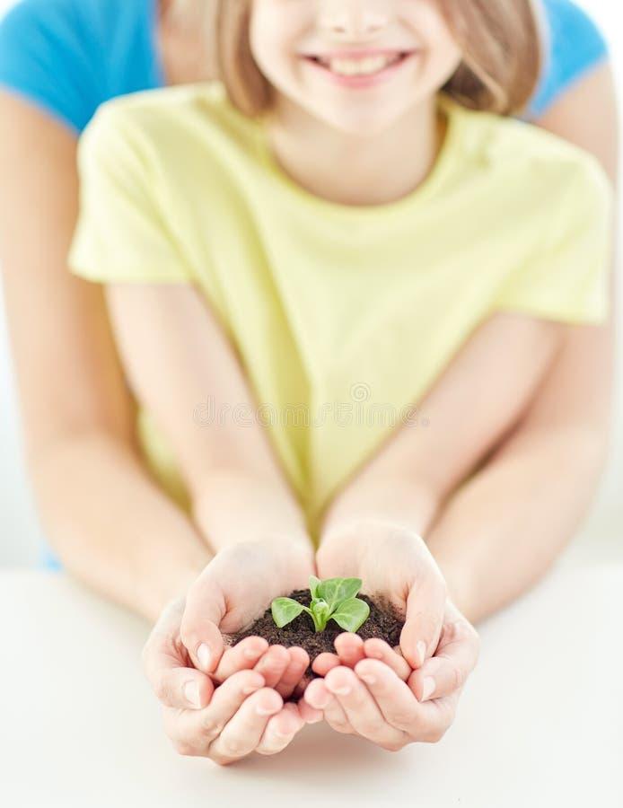 Chiuda su delle mani del genitore e del bambino che tengono il germoglio immagini stock