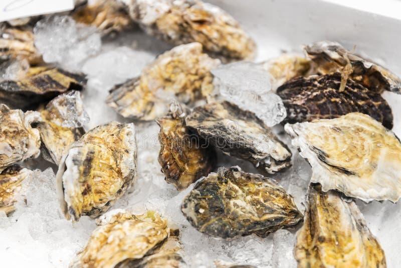 Chiuda su delle ostriche raffreddate su ghiaccio al mercato ittico immagine stock