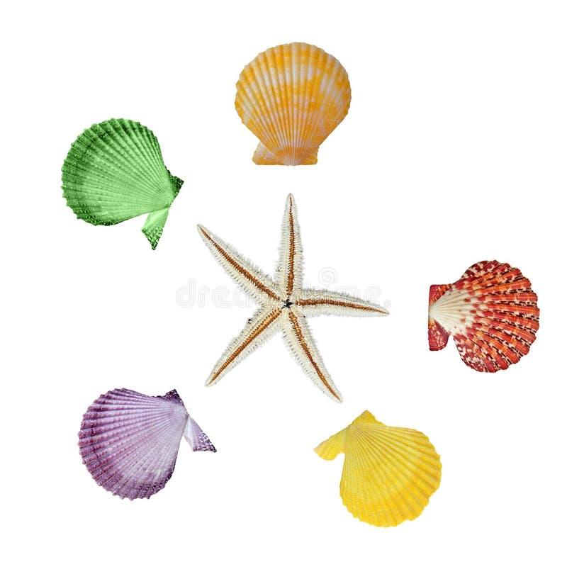 Chiuda su delle stelle marine e delle conchiglie fotografia stock