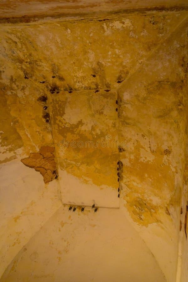 Chiuda su di alcuni pipistrelli che pendono dal soffitto di una costruzione all'aria aperta, in Amber Fort vicino a Jaipur, il Ra fotografia stock