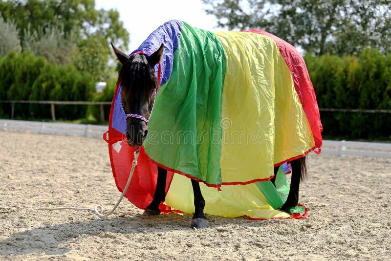 Chiuda su di bello giovane cavallo da sella durante l'addestramento immagine stock libera da diritti