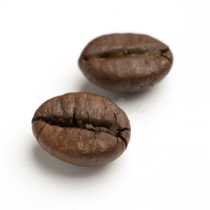 chiuda su di due chicchi di caffè arrostiti buio del commercio equo e solidale fotografia stock libera da diritti