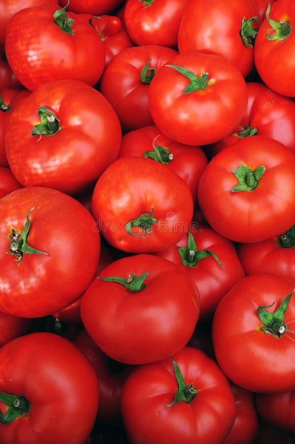 Chiuda in su di molti pomodori rossi freschi fotografia stock libera da diritti