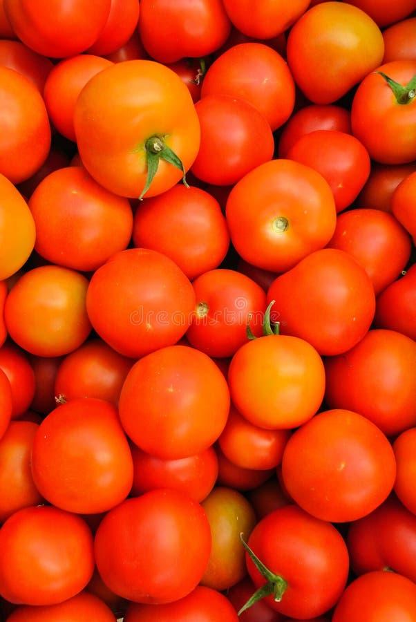 Chiuda su di molti pomodori rossi freschi immagini stock libere da diritti