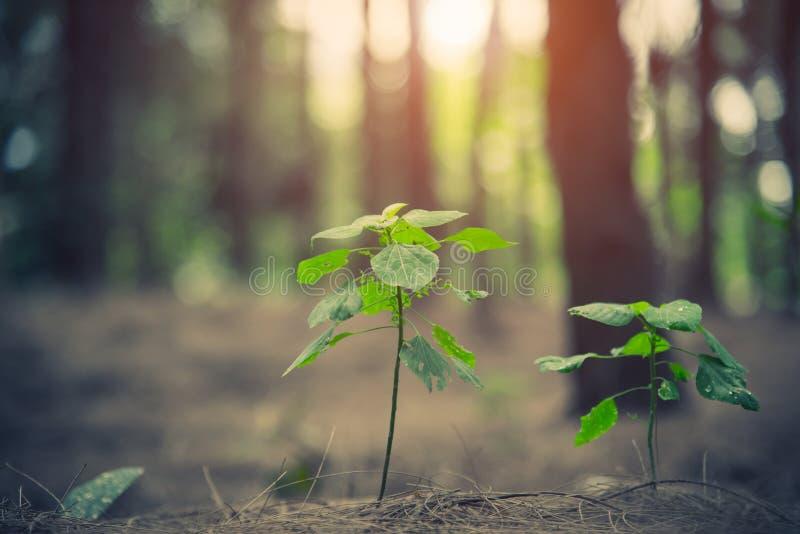 Chiuda su di poca pianta che emette luce su nell'inizio della foresta del concetto di vita Tema del paesaggio e della natura immagini stock