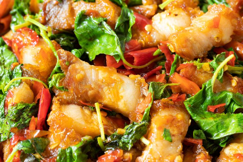 Chiuda su di scalpore ha fritto la carne di maiale croccante con basilico santo, alimento tailandese fotografia stock libera da diritti