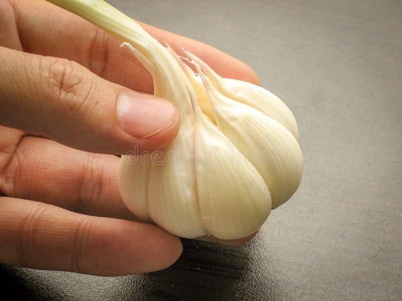 Chiuda su di singola lampadina fresca dell'aglio sulle dita con fondo di legno immagini stock libere da diritti