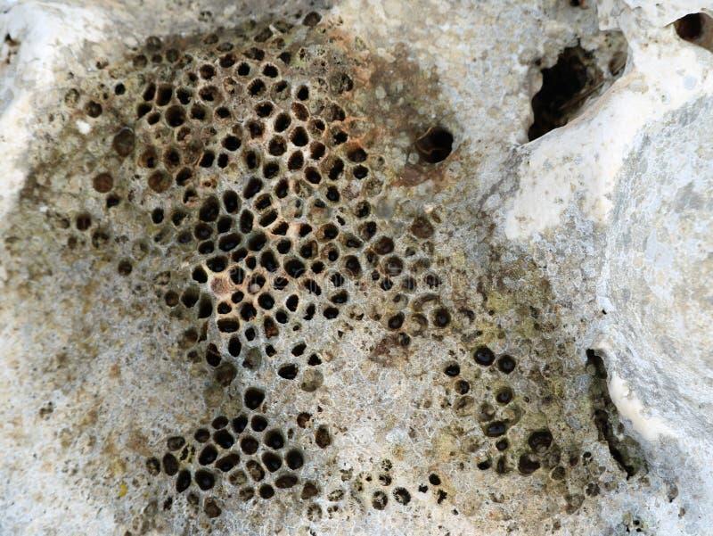 Chiuda su di struttura di pietra mediterrian con i piccoli fori, assomigliando ai fori dell'ape fotografia stock libera da diritti
