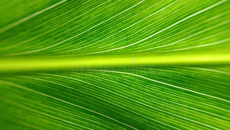 Chiuda su di struttura verde della foglia immagine stock