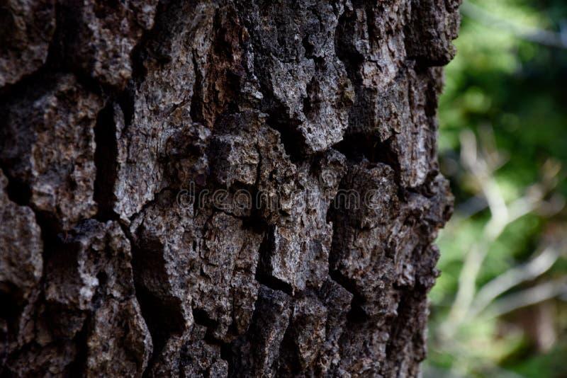 Chiuda su di un albero fotografia stock