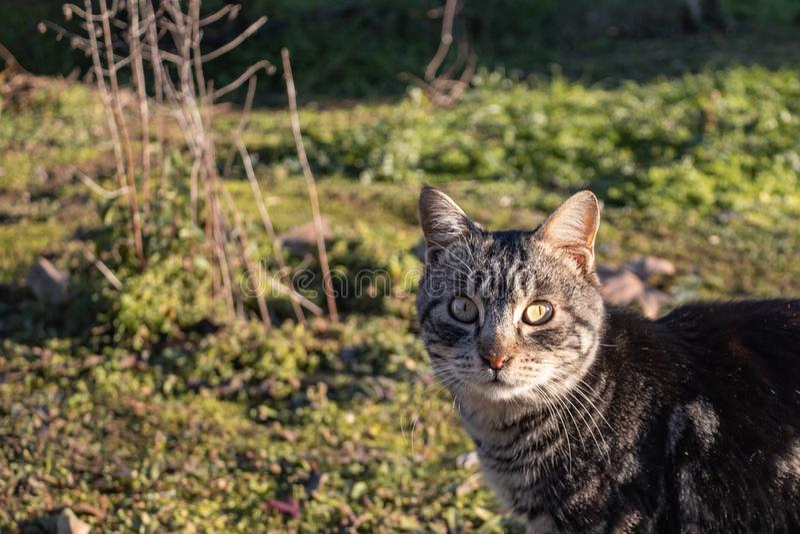 Chiuda su di un gatto interessato nel giardino fotografie stock libere da diritti