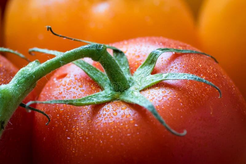 Chiuda su di un pomodoro rosso bagnato fresco con le foglie fotografia stock