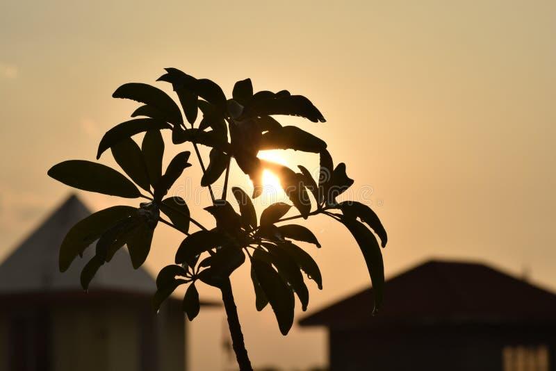 Chiuda su di una pianta con la luce del sole fotografia stock libera da diritti