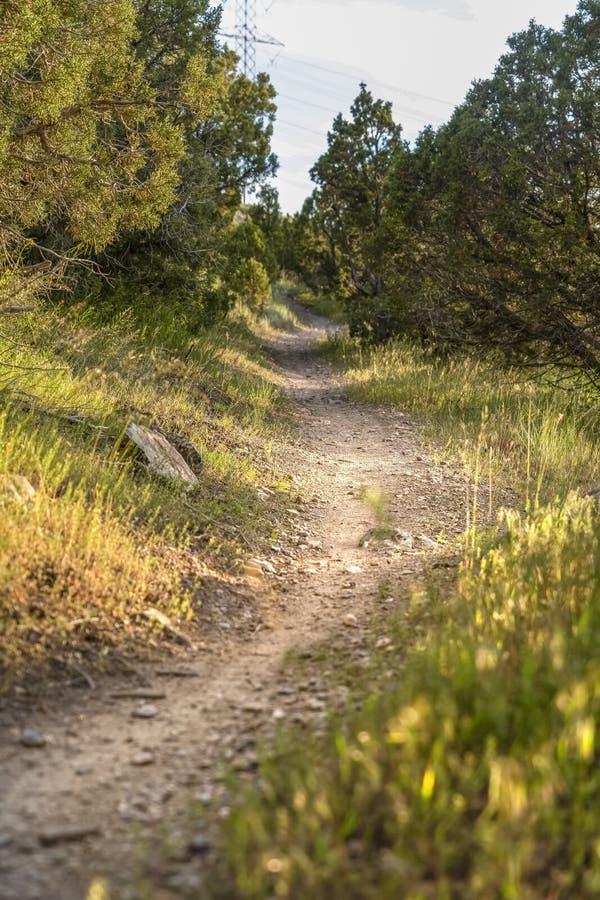 Chiuda su di una strada non asfaltata soleggiata e stretta nella foresta un giorno soleggiato fotografia stock